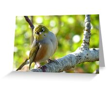 I'll Pose for your Today! - Silvereye - NZ Southland Greeting Card