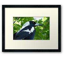 Maggie's Profile! - Magpie NZ - Southland Framed Print