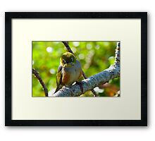 Lost in Deep Thought! - Silvereye - NZ Framed Print