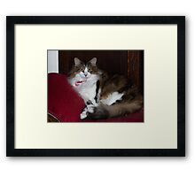 Keito on Red Velvet Bench Framed Print