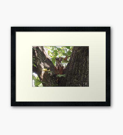 Showcasing a Leaf Costume Framed Print