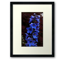 0439 - HDR Panorama - Flowers Framed Print