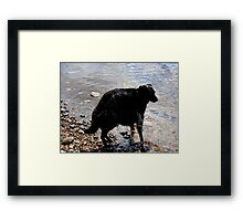 0441 - HDR Panorama - Dog Distorted Framed Print