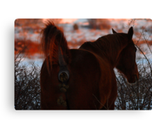Don't be a horse's a@#!!! Canvas Print