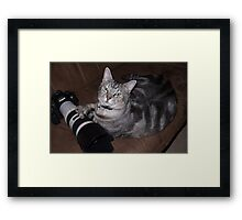Loki - Canon Spokescat. Framed Print