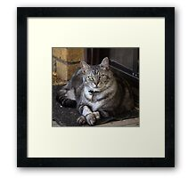 Loki Enjoying a Warm Spot. Framed Print