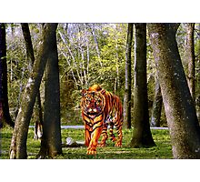 NA728-Loose Outside the Zoo Photographic Print