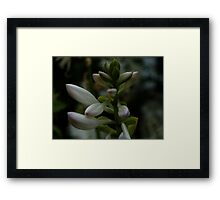 0480 - HDR Panorama - Lilly Framed Print