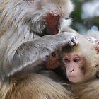 Monkeys in Shimla by Mottoy