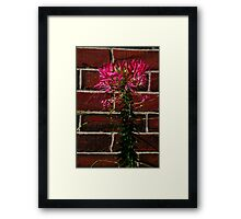 0514 - HDR Panorama - Flower Framed Print