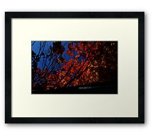 0524 - HDR Panorama - Autumn Leaves Framed Print