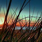 Sunset Grass. by Basia McAuley
