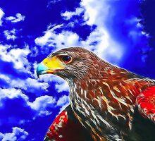Eyes of a Hawk 2 by Wendy Mogul