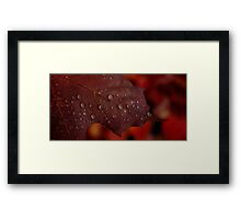 0548 - HDR Panorama - Autumn Leaf Framed Print