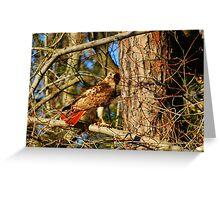 Red Tail Hawk 2 Greeting Card