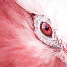 Eye Spy...  by Lass With a Camera