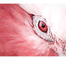 Eye Spy...  Photographic Print