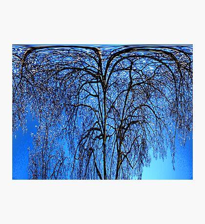 Crazy trrees Photographic Print