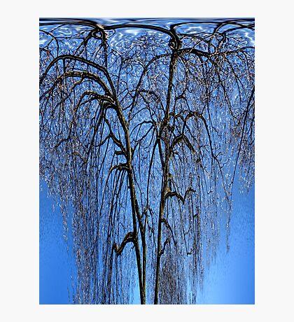 crazy trees2 Photographic Print