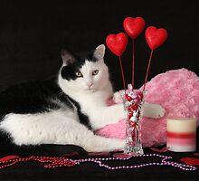 Gizmo's Heart by SLKensinger