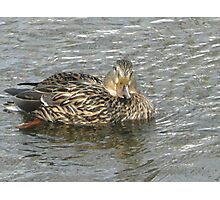 I am just Ducky Photographic Print
