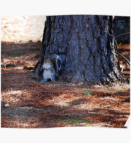 Squirrel Arrest Poster