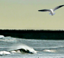 Roker Pier, Sunderland. Sticker