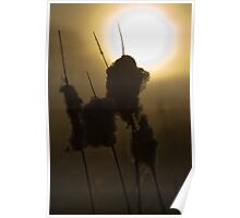 Dawn Rushes Poster