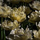 Tulip Glow by Elaine Teague