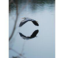 Heron Take-off Reflections Photographic Print