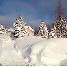 Snow Bound  by AuntieJ