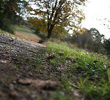 Dirt Road by Erin Flynn