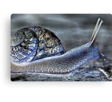 Snail's Pace Canvas Print