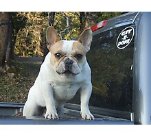 Git-R-Done Frenchie Photographic Print