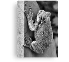Treefrog Canvas Print