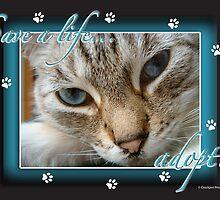 Save a life... Adopt! by Crockpot