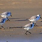 Sand Pipers by Kelsey  Chesterfield
