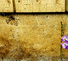 one flower by Aimerz