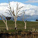 Three Trees Painting by GailD