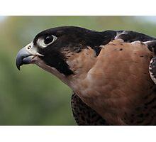 Falcon Eye Photographic Print