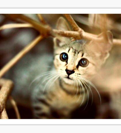 Kitten Sticker