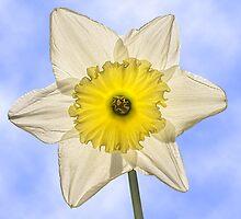 Spring Light by John Edwards