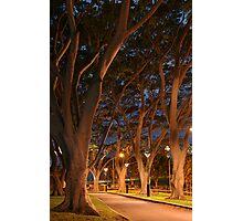 Path lights Photographic Print