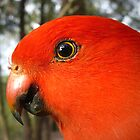 King Parrot by Ern Mainka
