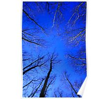 Woodland Sky View Poster