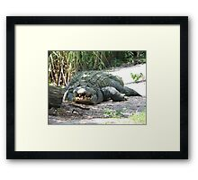 big gator Framed Print