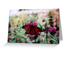 Magestic Monarch Beauty Greeting Card