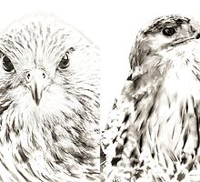 Falcon and Hawk by Dave  Knowles