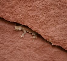Lizard in Rock Crevice by rdshaw