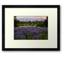 Field of Lupine and the Tetons Framed Print